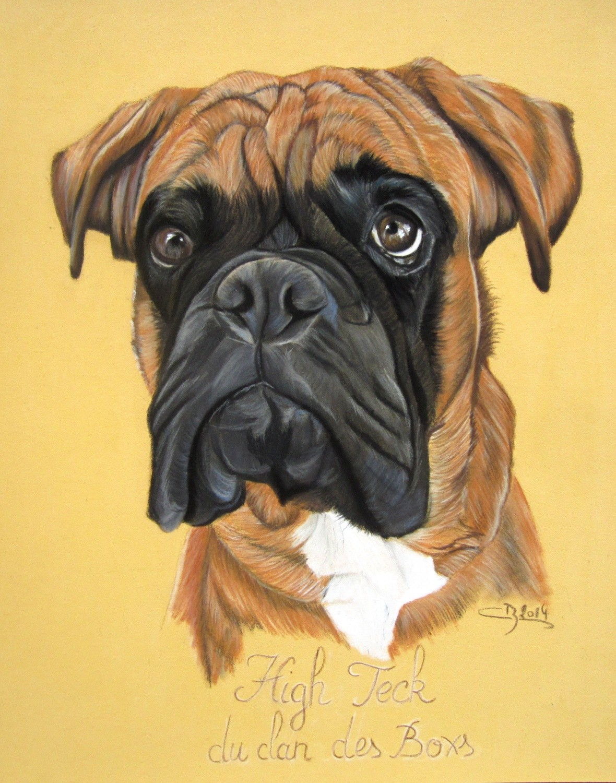 Portrait de boxer pastels secs artiste animalier - Coloriage boxer ...