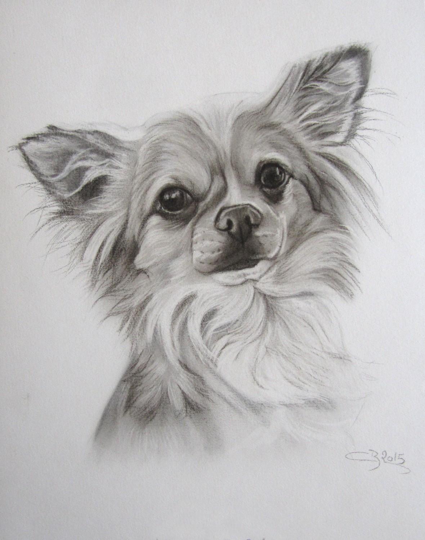 Dessin de chihuahua artiste animalier - Dessin de chi ...