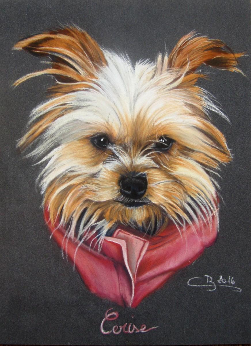 Les pastels de chiens artiste animalier - Dessiner un yorkshire ...