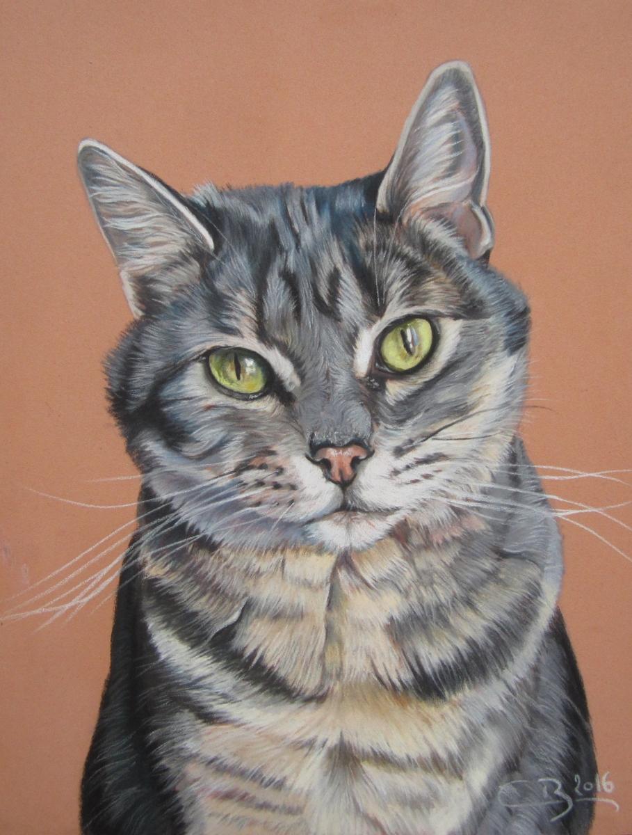 Les pastels de chats artiste animalier - Chats gratuits ...
