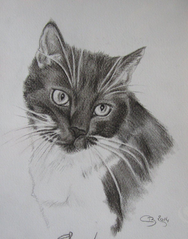 Les crayonn s d animaux artiste animalier - Modele dessin chat facile ...