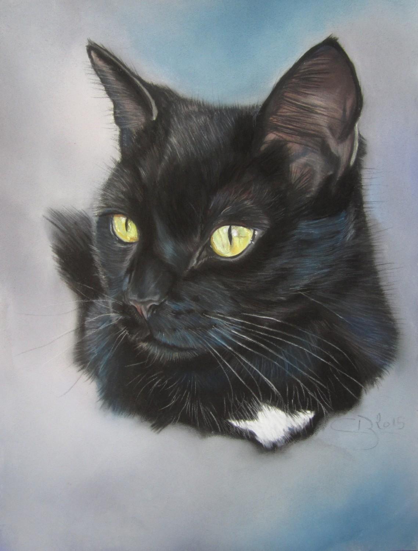 Les pastels de chats artiste animalier - Dessin chat noir ...