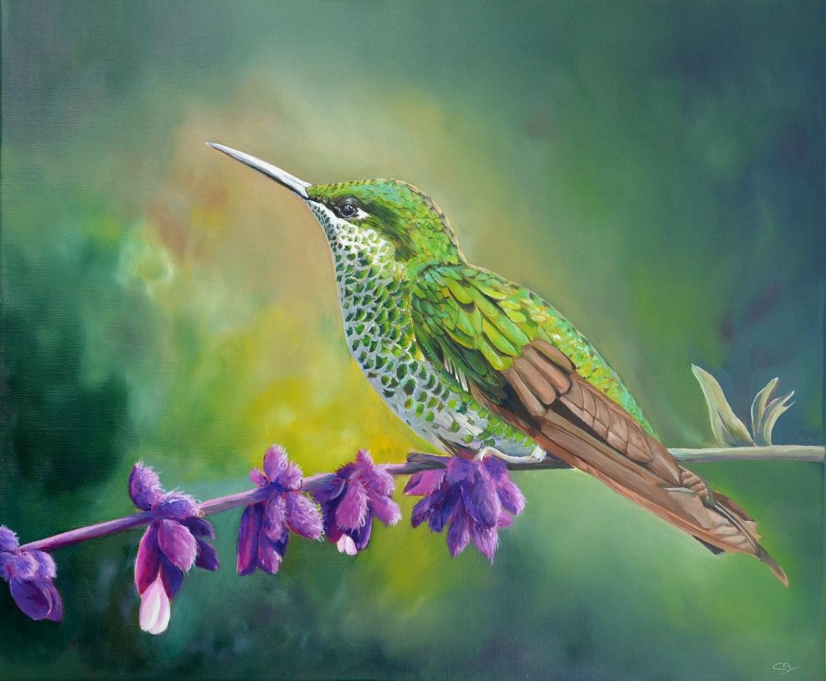 Colibri du Costa Rica